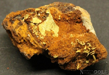 specimen_goldt_4043tm